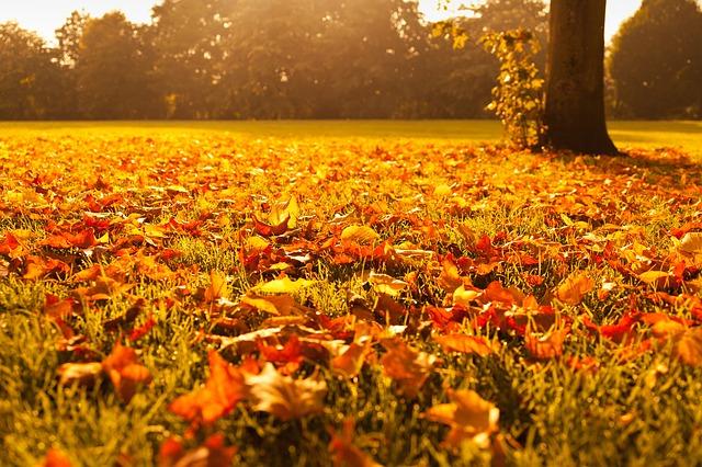 autumn-72736_640leaves